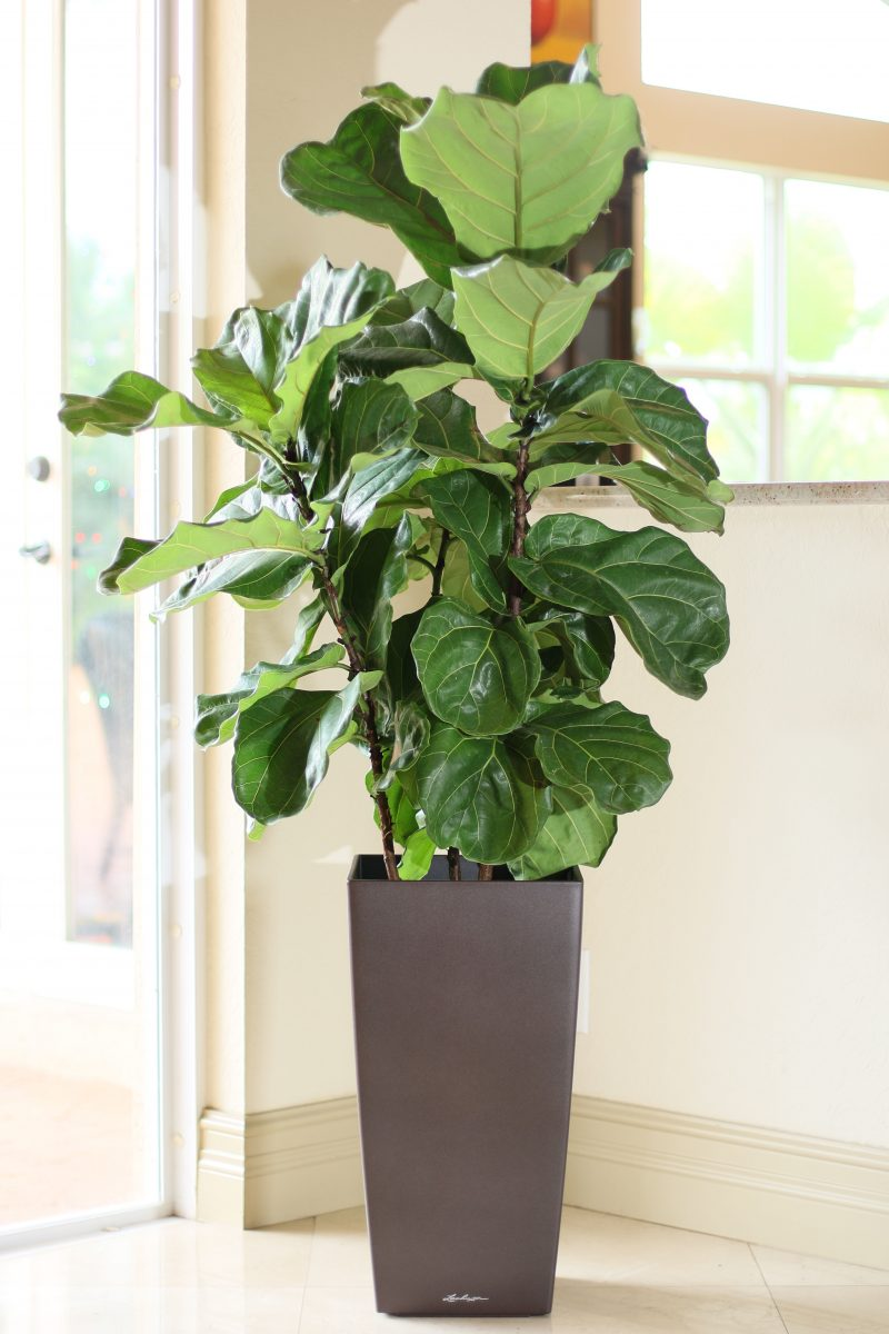 House Plants / Indoor / Interior