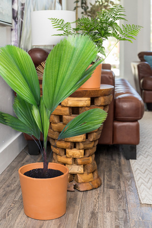 Indoor Potted Plants